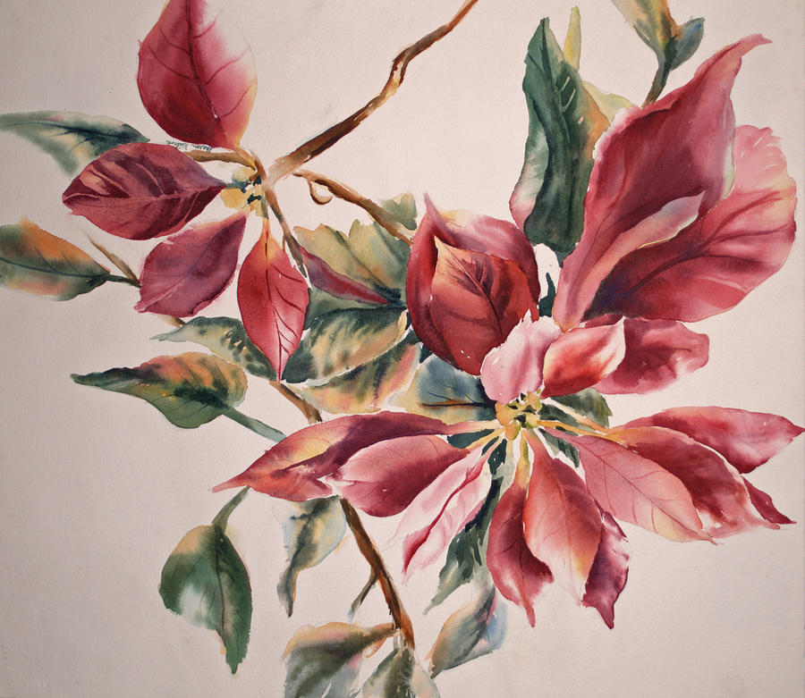 Blurred Painting - The Poinsettia by Sharon K Wilson