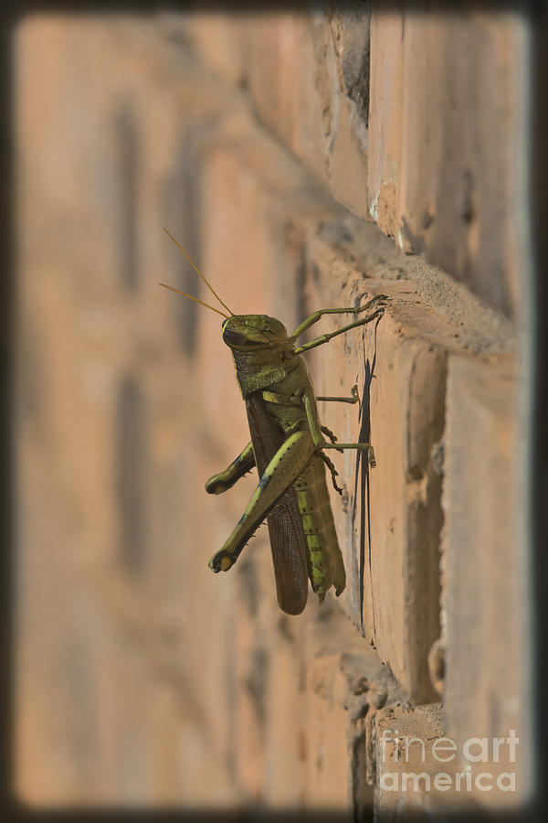 Grasshopper Mixed Media - The Visitor by Kim Henderson