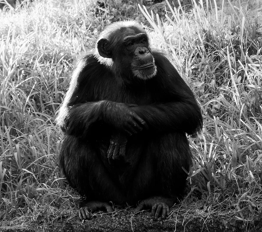 Wildlife Photography Photograph - Thinking by David Lee Thompson
