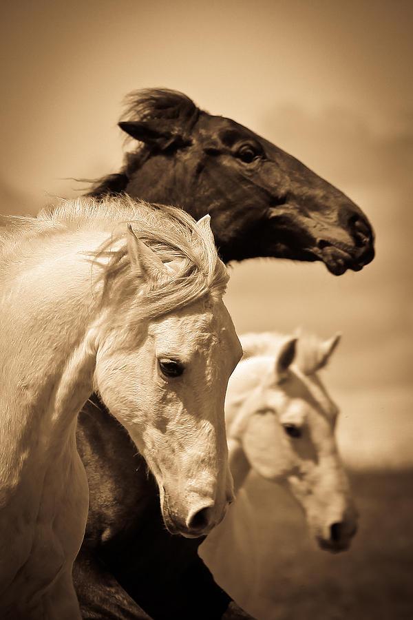 White Horses Photograph - Three Horses by Steve McKinzie