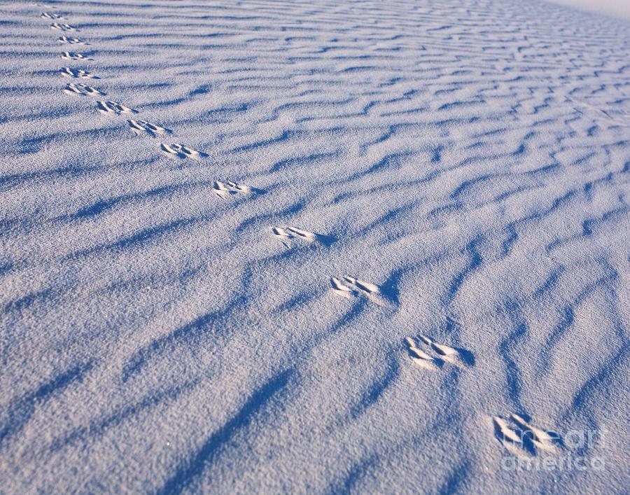 White Sands Photograph - Tracks at White Sands by Matt Tilghman
