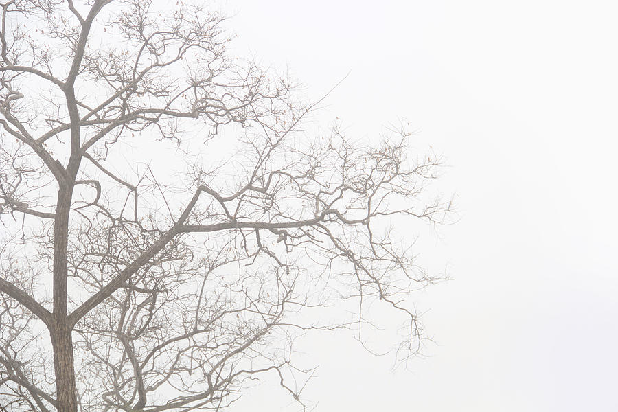Sunrise Canvas Prints Photograph - Tree Against A White Sky In The Early Morning Hours by Gal Ashkenazi