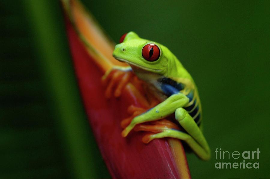 Frog Photograph - Tree Frog 19 by Bob Christopher