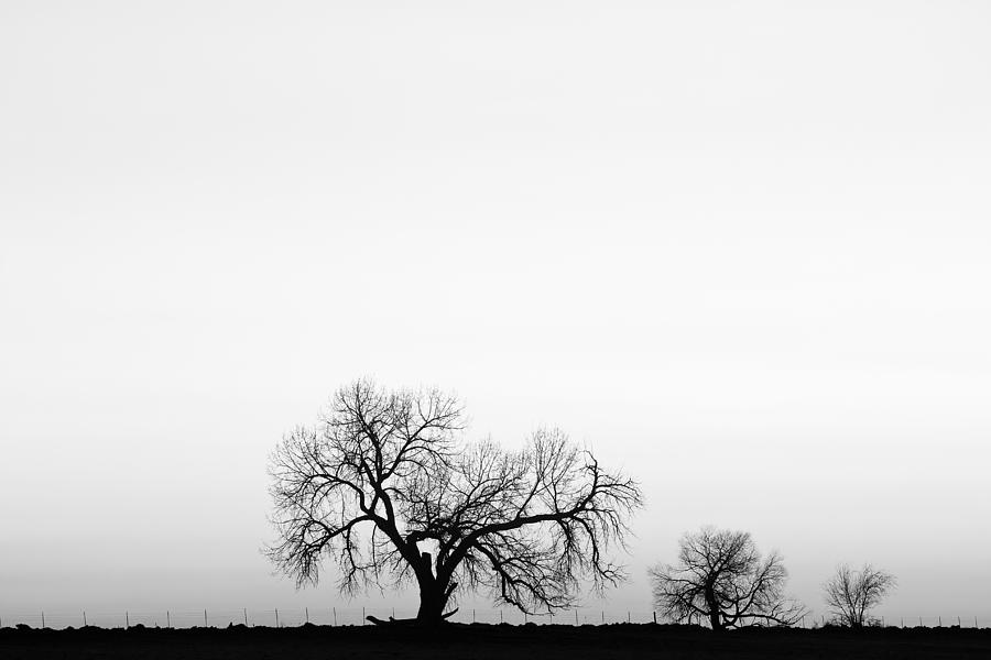 Three photograph tree harmony black and white by james bo insogna