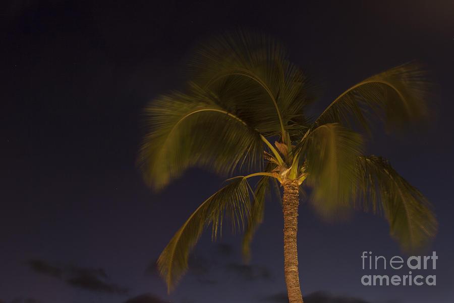 Tropical Paradise Photograph by Sharon Mau