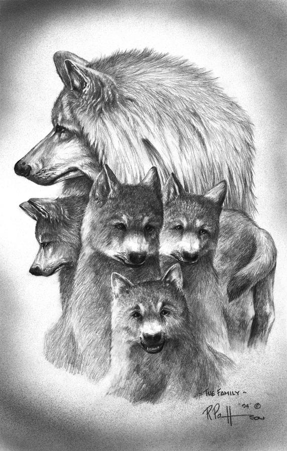 Tundra Wolf Family Drawing By Bob Patterson