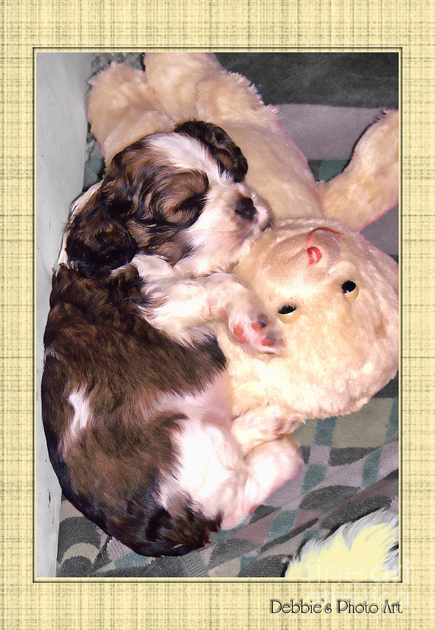 Puppy Photograph - Two Stuffed Animals by Debbie Portwood