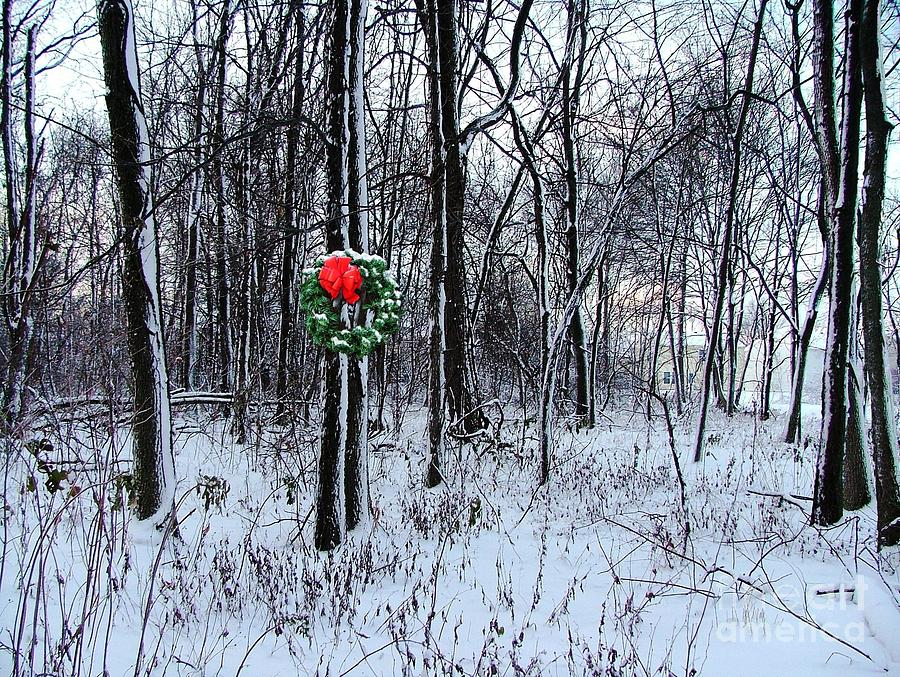 Photograph - Tyras Woods At Christmas by Julie Dant