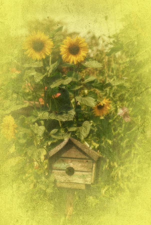 Sunflowers Photograph - Vintage Garden by Richard Cummings