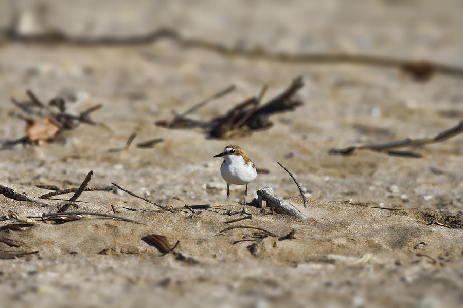 Wading Bird Photograph - Wading Bird by Douglas Barnard