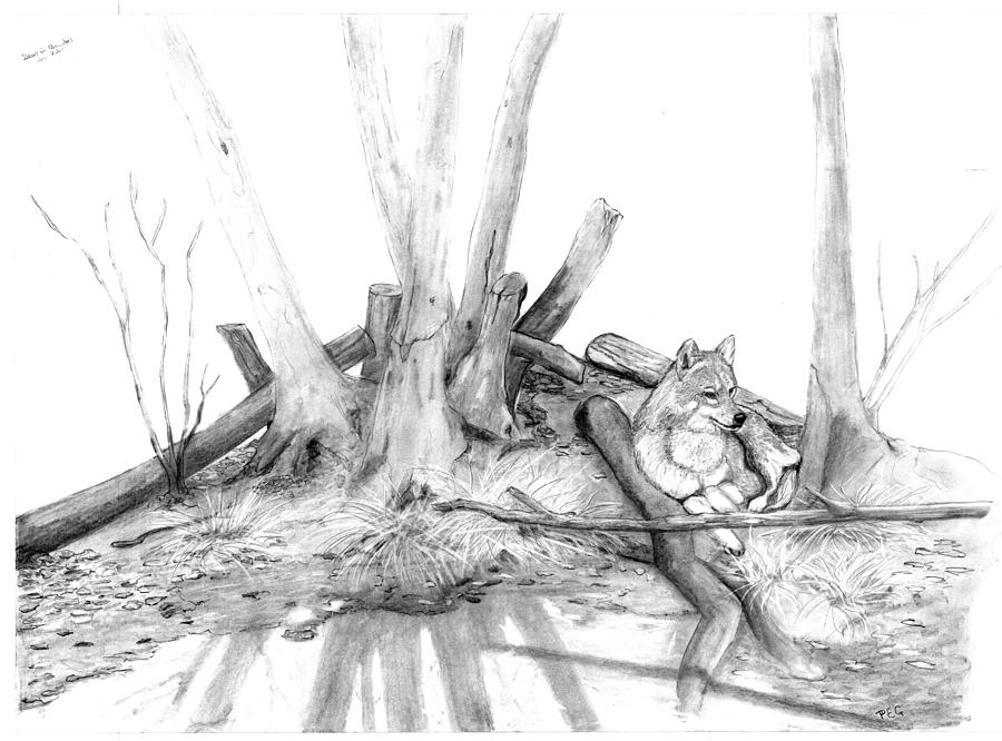 Wolf Drawing - Watching Wolf by Peter Edward Green