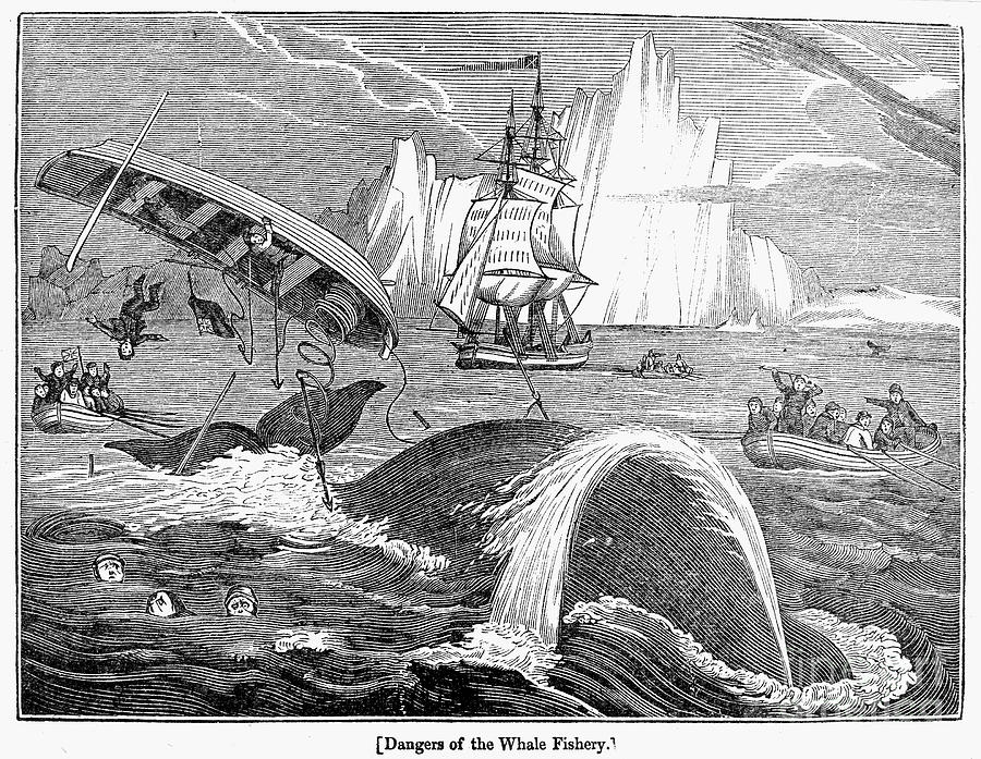 1833 Photograph - Whaling, 1833 by Granger