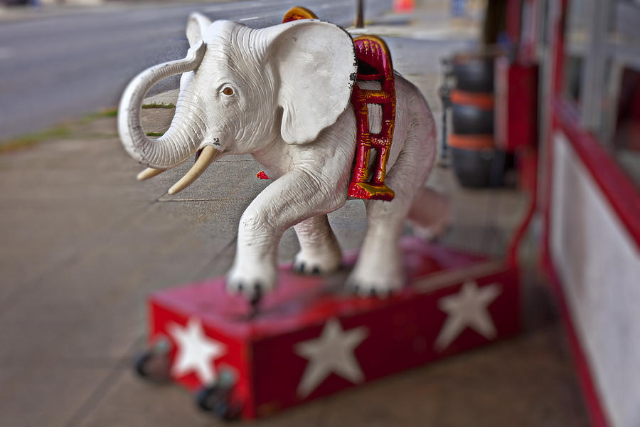 White Photograph - White Elephant by Garry Gay