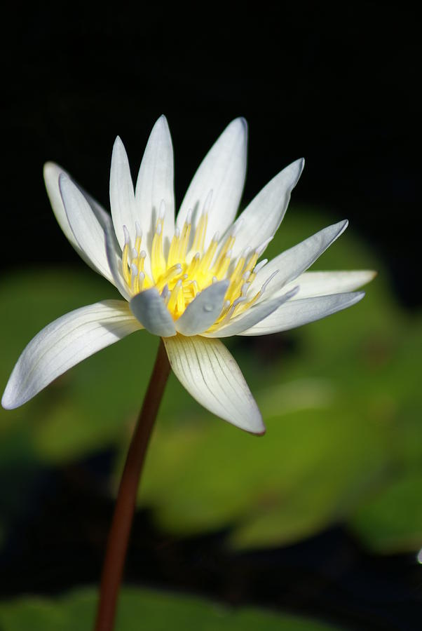 Flower Photograph - White  by Margaret Steinmeyer