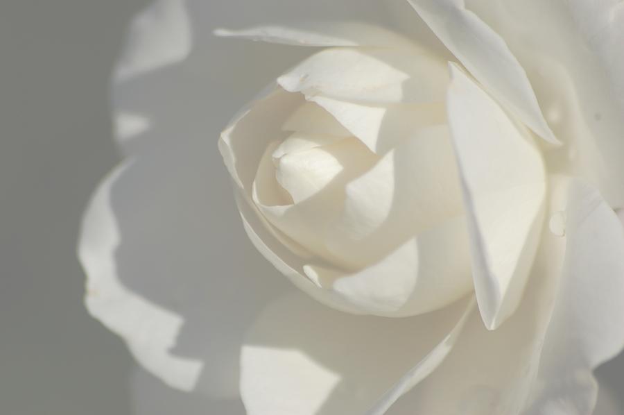 White Photograph by Meeli Sonn