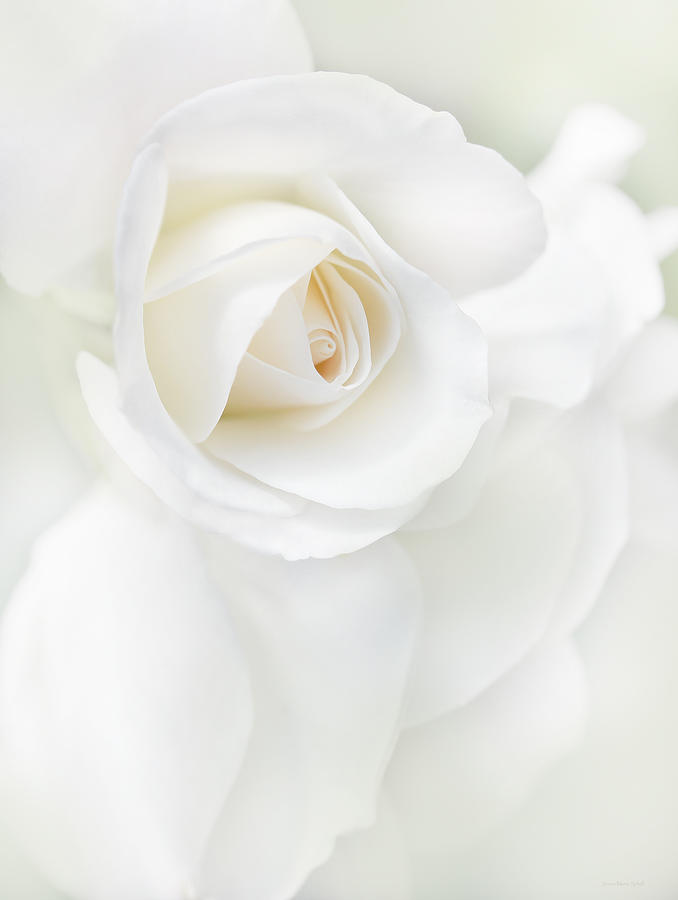 Rose Photograph - White Rose Flower Petals by Jennie Marie Schell