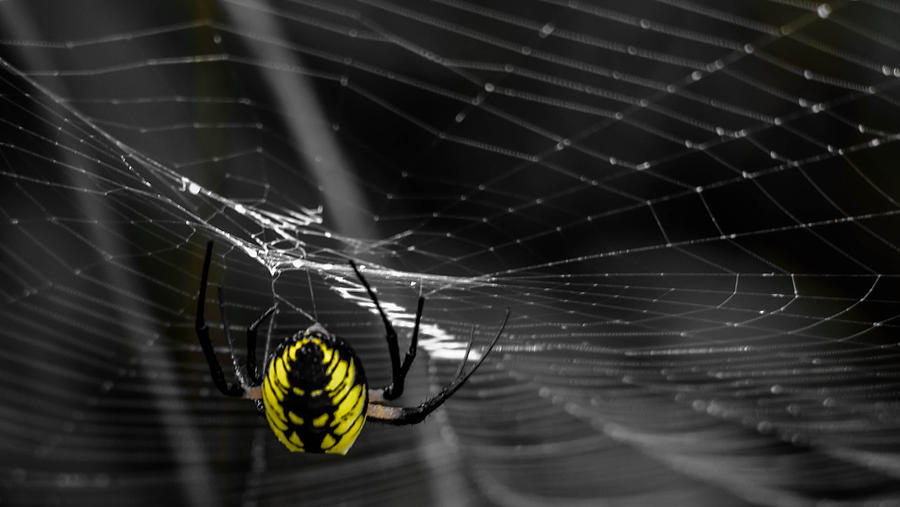 Wicked Web Photograph by Brian Stevens