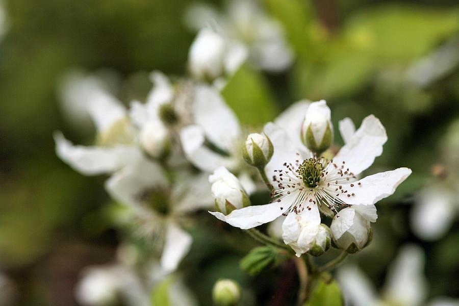 Wildflower Photograph - Wild by JC Findley