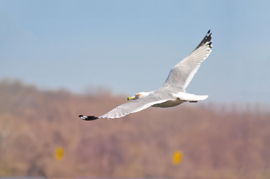 Wingspan Photograph - Wingspan by Bill Cannon