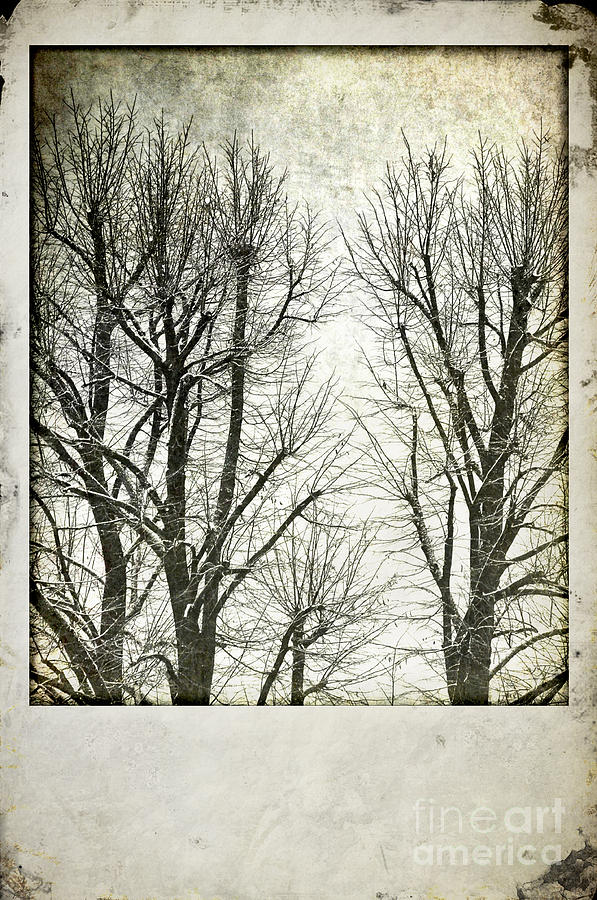 Snowy Photograph - Winter Trees by Silvia Ganora