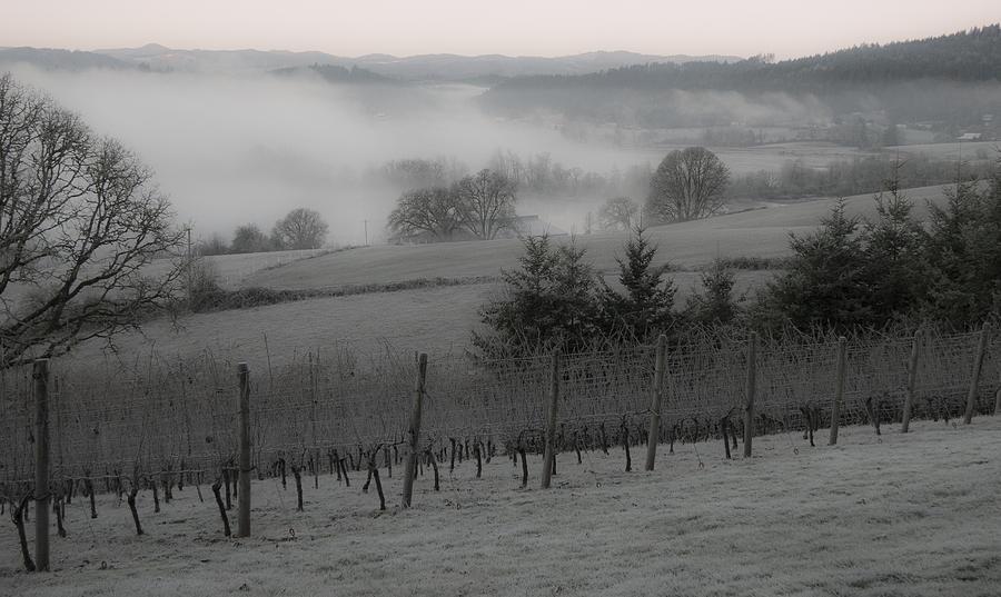 Vineyard Photograph - Winter Vineyard by Jean Noren