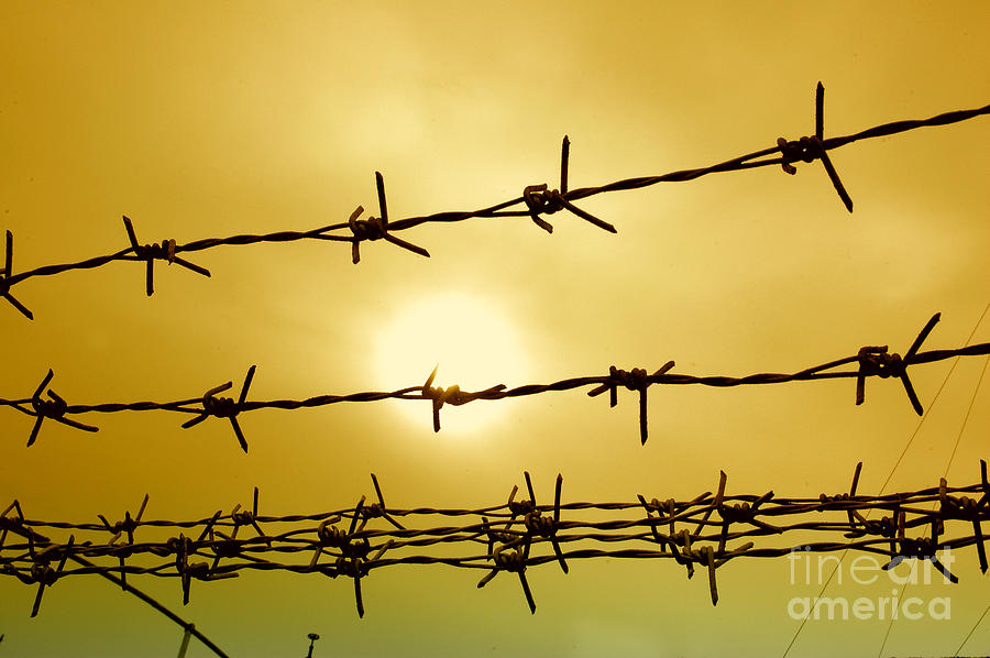 Security Photograph - Wire Fence by Antoni Halim
