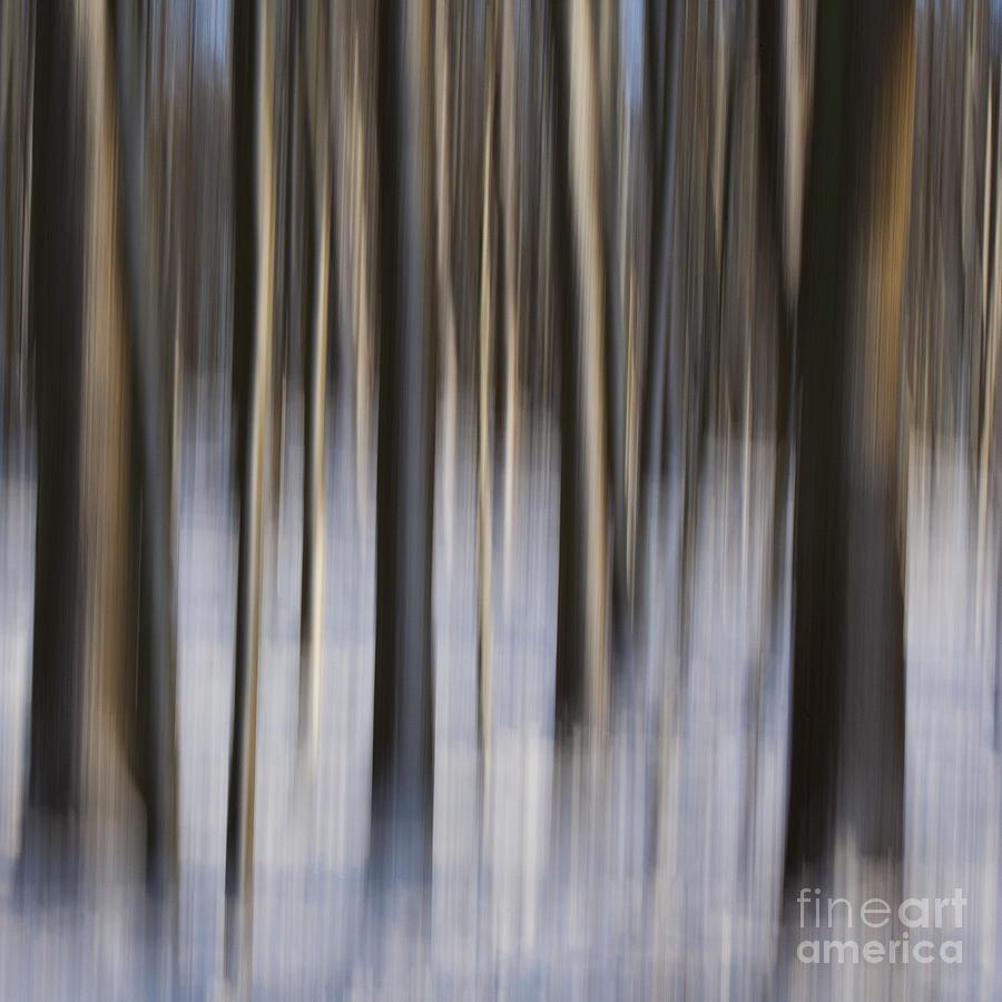 Decorative Photograph - Woodland Fantasy by Heiko Koehrer-Wagner