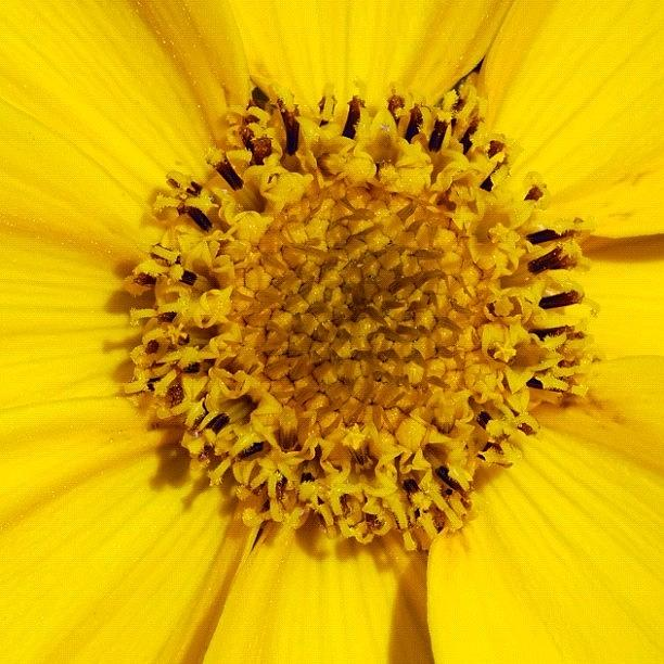 Yellow Photograph - Yellow Flower Detail by Matthias Hauser