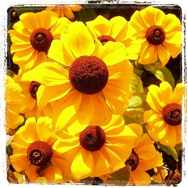 Flower Photograph - Yellow Flowers by Luisa Azzolini
