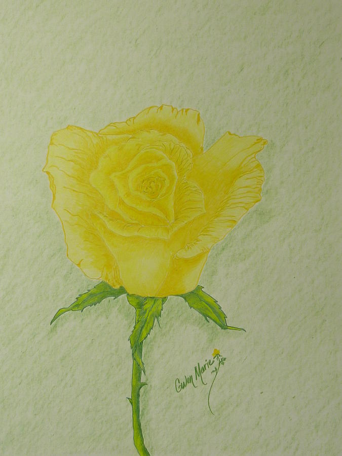 Yellow Rose Drawing By Gwen Rose