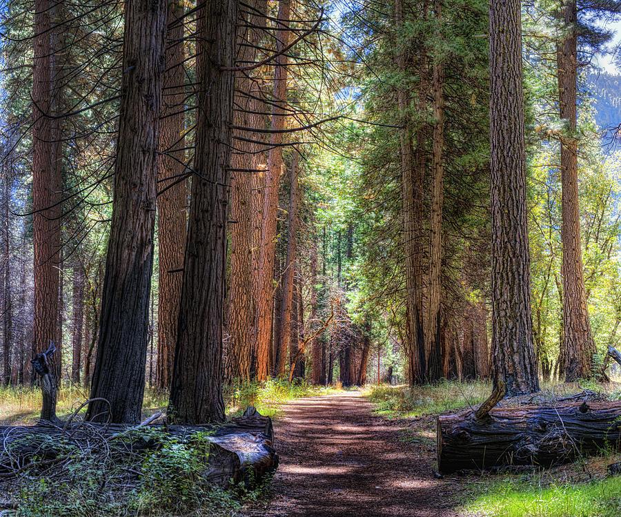 Yosemite Photograph - Yosemite Trail by Stephen Campbell