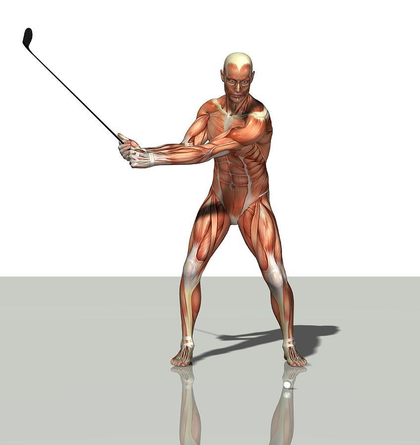 Human Photograph - Male Muscles, Artwork by Friedrich Saurer