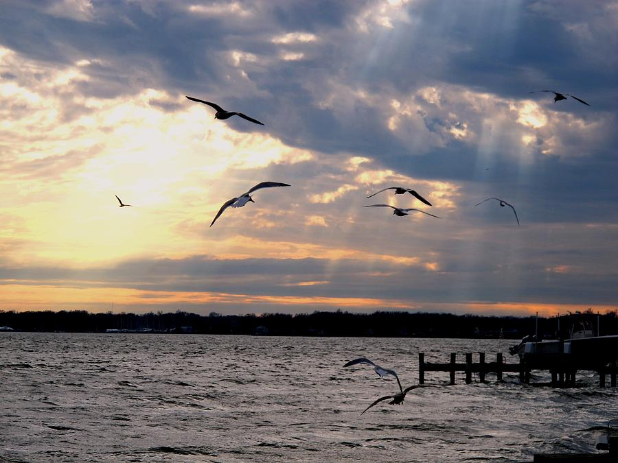 Nature Photograph - Seagulls In Flight by Valia Bradshaw