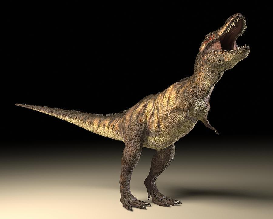 Animal Photograph - Tyrannosaurus Rex Dinosaur by Roger Harris