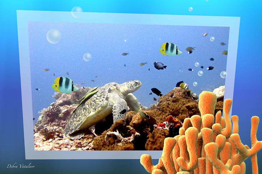 Under The Sea Photograph - Under The Blue Collection by Debra     Vatalaro