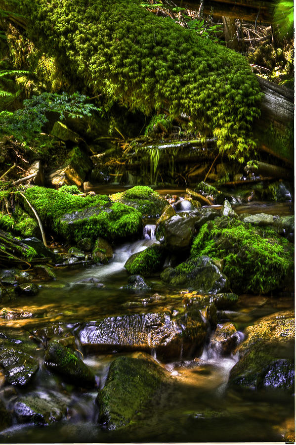Lost Girl Creek Photograph by Grover Woessner