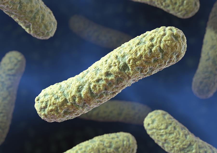 rod shaped bacteria artwork photograph by david mack