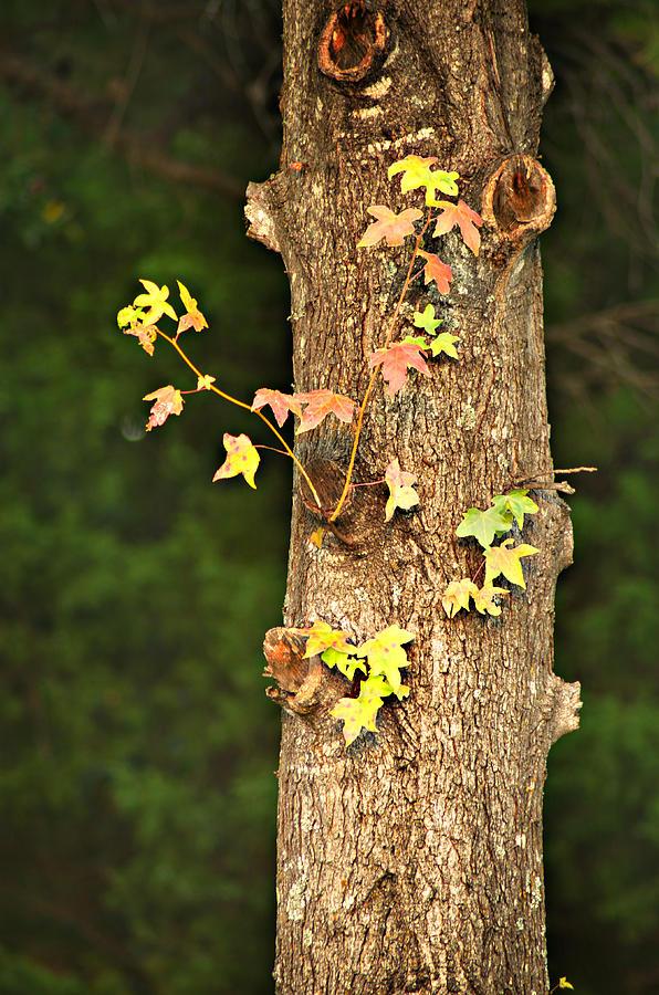 Autumn Photograph - 1209-0859 September Tease by Randy Forrester