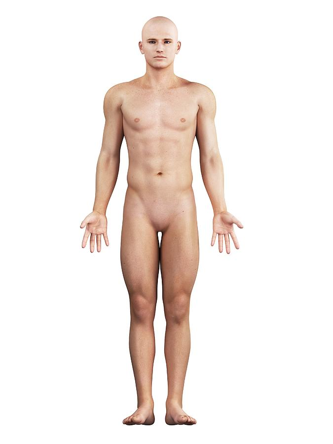 Male frontal nude photography