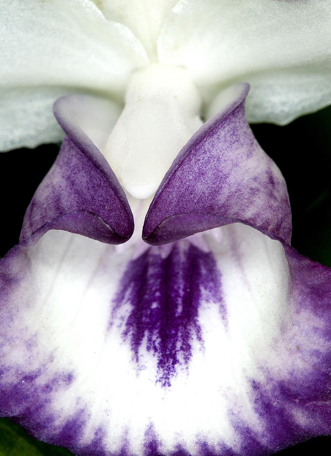 Ribet Photograph - Orchid Flower Bloom by C Ribet