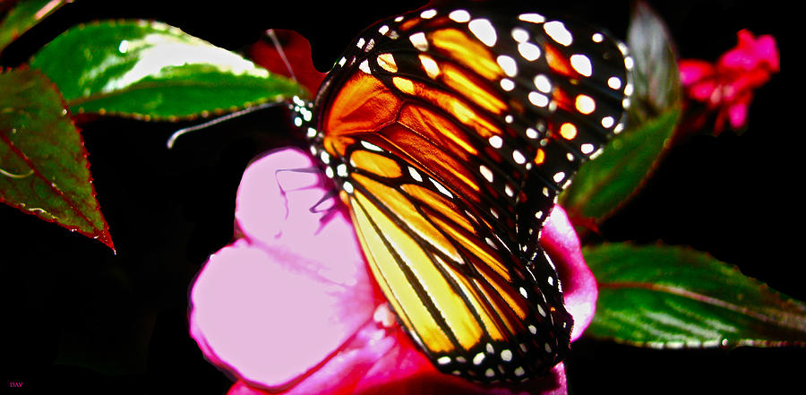 Butterfly Collection Night Photograph - Butterfly Collection  by Debra     Vatalaro