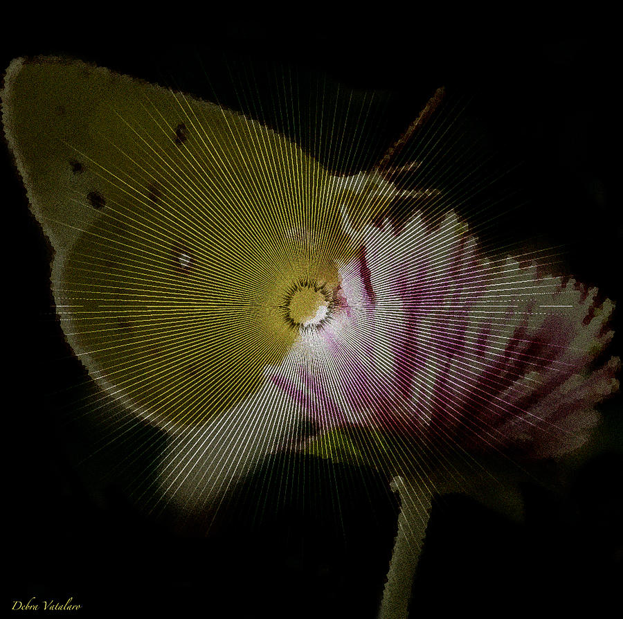 Butterfly Photograph - Butterfly Collection Design by Debra     Vatalaro