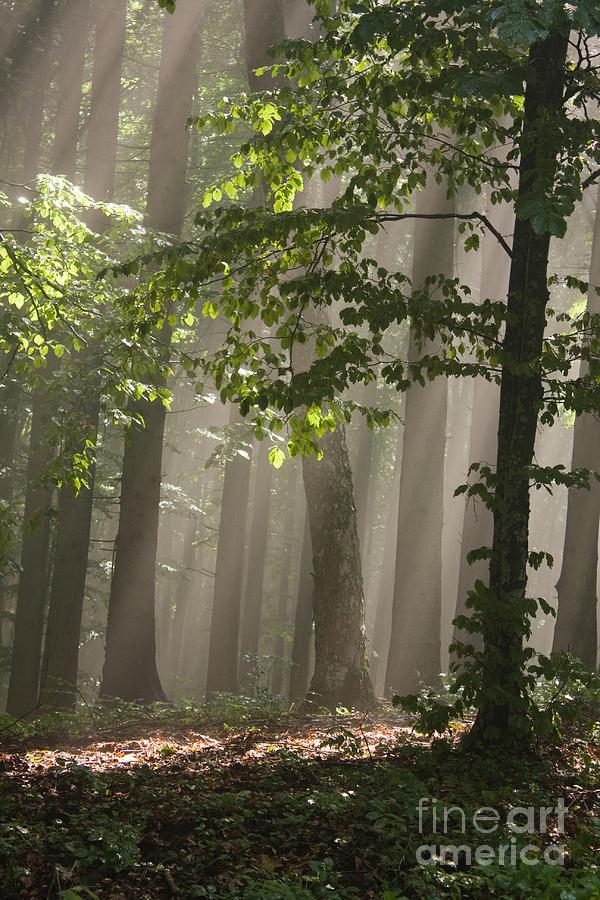 Autumn Photograph - Forest by Odon Czintos