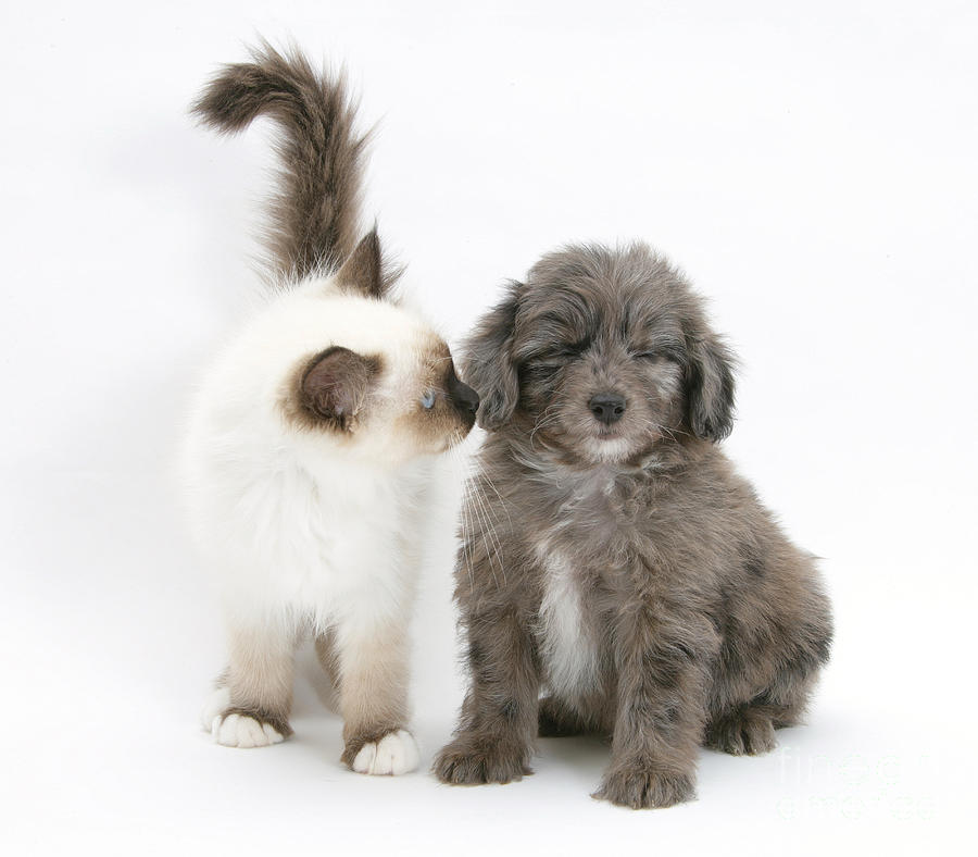 Animal  - Puppy And Kitten by Mark Taylor