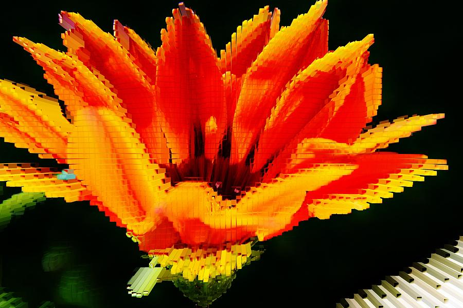 Close Up Photograph - Gazania Krebsiana Flower by Werner Lehmann