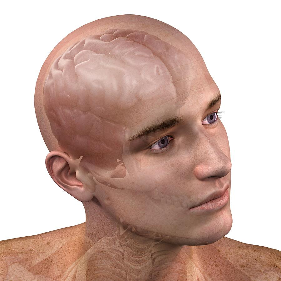 Artwork Photograph - Head Anatomy, Artwork by Sciepro