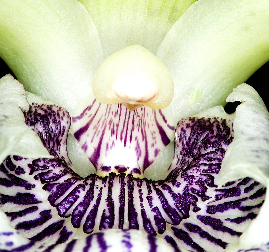 Orchid Photograph - Orchid Flower Bloom by C Ribet