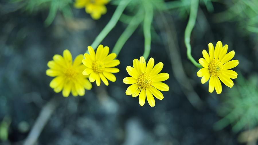 Flower Photograph by Gornganogphatchara Kalapun