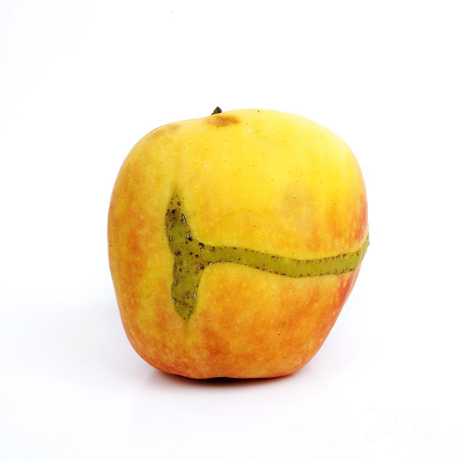 Studio Photograph - Apple by Bernard Jaubert