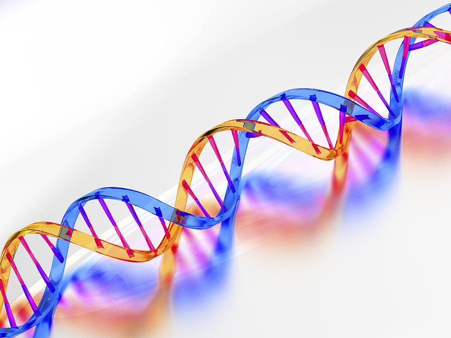 Deoxyribonucleic Acid